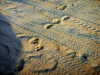 Chobe National Park - Tracks