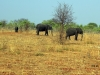 Chobe National Park - Elephants 3