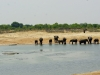 Hwange NP - Mixture of animals