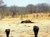 Hwange NP - Paying respect 2
