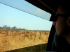 Hwange NP - From inside the car