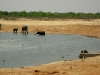 Hwange NP - View from hideout