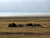 serengeti-and-ngorongoro-crater-lion-5