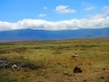 Serengeti and Ngorongoro Crater Safari