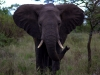 serengeti-and-ngorongoro-crater-elephant-12