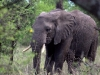 serengeti-and-ngorongoro-crater-elephant-3