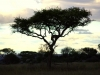 serengeti-and-ngorongoro-crater-leopard-11