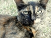stone-town-two-face-cat