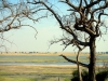 Chobe National Park - View 2