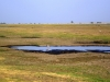 Chobe National Park - View3
