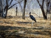 Hwange NP - Huge bird