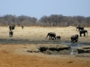 Hwange NP - Greeting