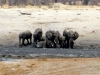 Hwange NP - Playing in the mud 3