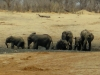 Hwange NP - Playing in the mud