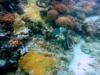 Indian Ocean Dive - Zanzibar