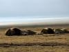 serengeti-and-ngorongoro-crater-lion-6