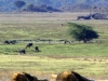 serengeti-and-ngorongoro-crater-lion-9