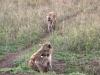 Serengeti and Ngorongoro Crater Safari