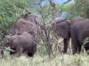 serengeti-and-ngorongoro-crater-elephant-2