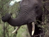 serengeti-and-ngorongoro-crater-elephant-6