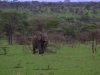 serengeti-and-ngorongoro-crater-elephant-9
