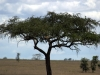 serengeti-and-ngorongoro-crater-leopard-6