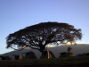 serengeti-and-ngorongoro-crater-tents-3