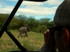 serengeti-and-ngorongoro-crater-us-12