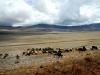 serengeti-and-ngorongoro-crater-view-1