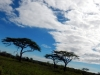 serengeti-and-ngorongoro-crater-view-20