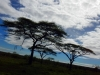 serengeti-and-ngorongoro-crater-view-21
