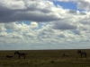 serengeti-and-ngorongoro-crater-view-36