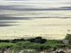 serengeti-and-ngorongoro-crater-view-37