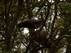 mas-farm-bird-making-nest-3