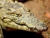 mas-farm-croc
