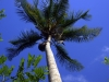spice-tour-climbing-up-palm-tree