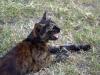 stone-town-kitty